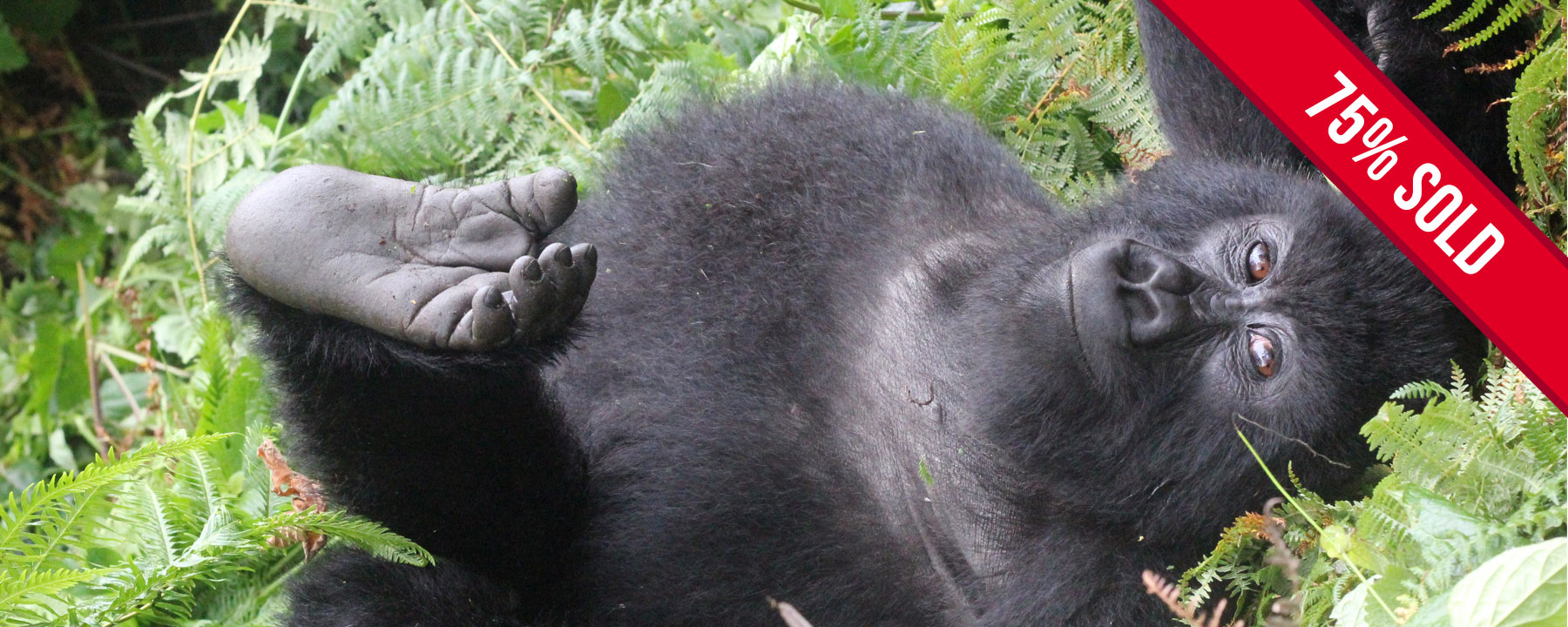 Gorillas and the Mara