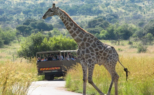 SCR6o5000-Sun City-Pilanesberg National Park