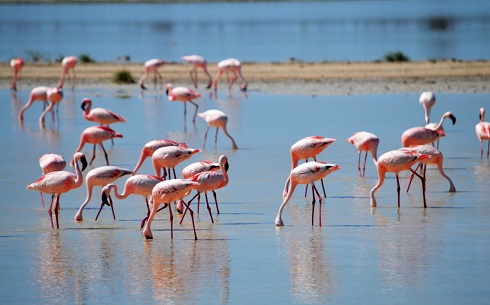 walvis-bay-flamingos